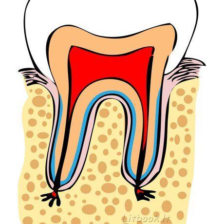 Як зберегти зуби здоровими